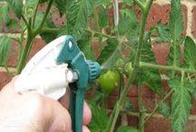 kertészkedjünk