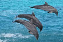 Dolphin Academy / Dolphin Academy in Curacao