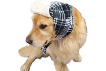 Dogs in Hats, Dog Aviator Hat, Cute Doggie Scarf Sets. Gift for Dog My Canine Kids, Cloak & Dawggie / See cute pictures of dogs wearing Warm and Cozy Winter Sherpa Lined Aviator Hat and Scarf sets. All dog sizes available. Hats for doggies. My Canine Kids and Cloak and Dawggie dog accessories for winter.