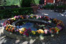 Flowers in Pietrabuona / Our beautiful flowers!!! Pietrabuona flowered
