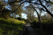 San Luis Obispo County, CA / The scenery, landmarks, and lifestyle in San Luis Obispo County, CA