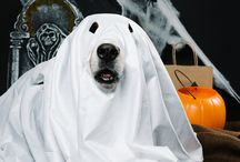 Halloween: Top 10 Most Popular Costumes