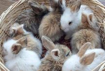 Rabbits / konijnen!!!!