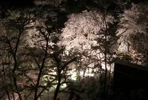 Landscape / by Soichiro Ichiba