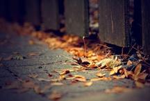 fall. / by molly newborn
