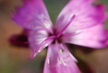 Flora in Defileul Jiului