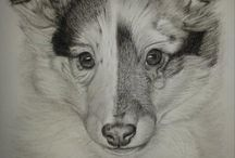 portrait drawings animals / portrait drawings made with pastelpencils/pastelchalc