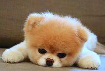 El perro que algún día tendré :D