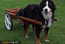 hund trækker vogn
