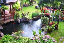 Japonské zahrady1
