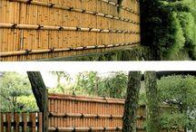 Bambú y Guadua