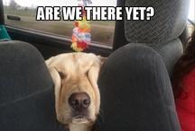 Tahdon koiran!