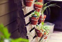Gardentastic / by BeeJay