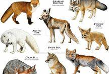 Animals WA