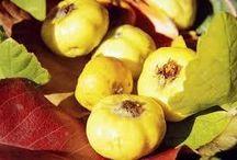 Alıç Fidanı Çeşitlerimiz / Tüplü satışı yapılan #alıç  #fidanı  çeşitlerimizi incelemek için http://www.e-fidancim.com/Alic-Fidani,LA_1963-2.html tıklayınız