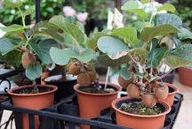 rastliny exoticke