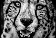 Laurent Baheux Art