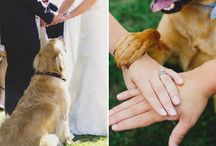Wedding with dogs <3
