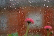 Rainy Days / Días de Lluvia...