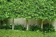 Planting designs