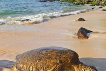 Hawaii / Holiday time