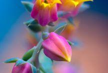 Flores / Flores bonitas