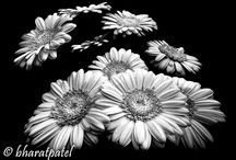 Fine Art photography / This is for fine art black and white images