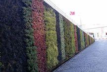 Vertical Gardens / Vertical gardens,wall gardens,green wall,wall design,landscape,landscape design