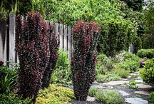 Design Projects / Garden design projects by Tower Perennial Gardens
