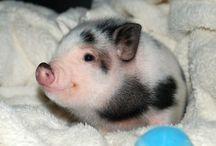 pig / lovely pig♥