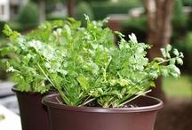 Grow Tips / Good gardening tips...