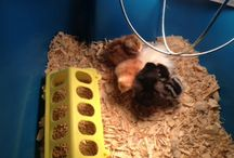 """The """"NEW"""" Chicks / Chickens"""