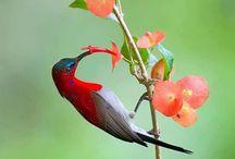 Winged Creatures / Loving blessed beings with wings - bees, butterflies, hummingbirds, etc.