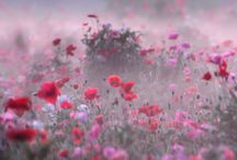 Wonderfull flowers