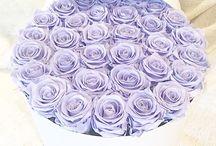 лиловые розы ♡♡