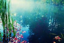 Natural Beauty: Nature