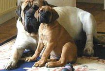 I'm a dog lover<3 / by Laiken Estes