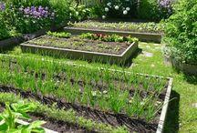 Сад, огород / Идеи для ландшафтного дизайна