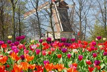De Keukenhof The Netherlands