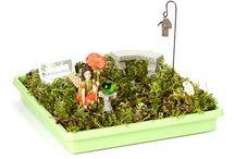 Miniature Gardens / Ideas to use in making miniature gardens