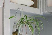 Green display ideas with glass for small space