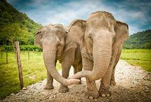 Elephants...