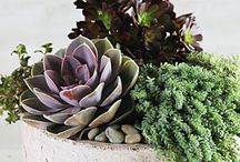 Gardening for Arizona / by Beth Lott
