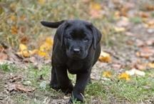 Perfect Puppies. Just because. :) / #puppies #cuteness #pups #bundlesoffun