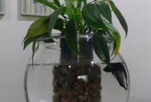 Aquaponic / Fish supporting plants