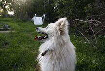 šimon a kara(my dog)