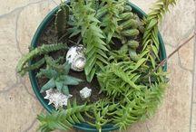 myplants