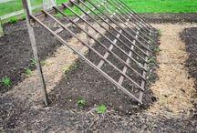 idei gradina legume
