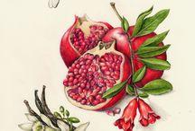 natürmort meyveler