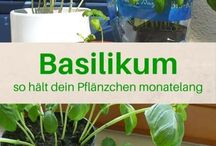 Plants & Herbs / Growing decoration & use of plants& herbs